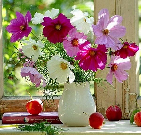 букеты цветов космея маслом: 25 тыс изображений найдено в Яндекс.Картинках