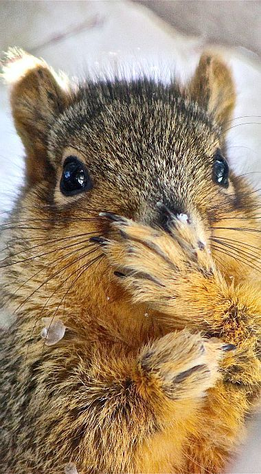 Was I supposed to keep that a secret?                                                                                                                                                     Squirrel