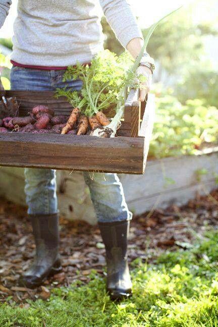 kitchen ~❀~❧~✿~ garden