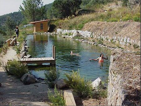 17 best images about bio pool on pinterest recycling for Piscinas biologicas