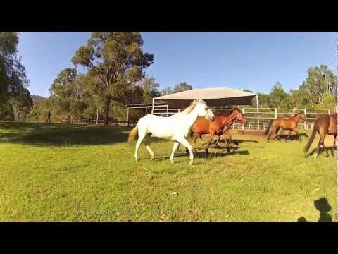 Horse Riding & Farm-Stay Accommodation | Hidden Valley