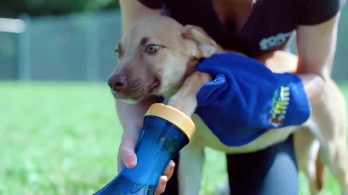 best 25 dog inventions ideas on pinterest dog products