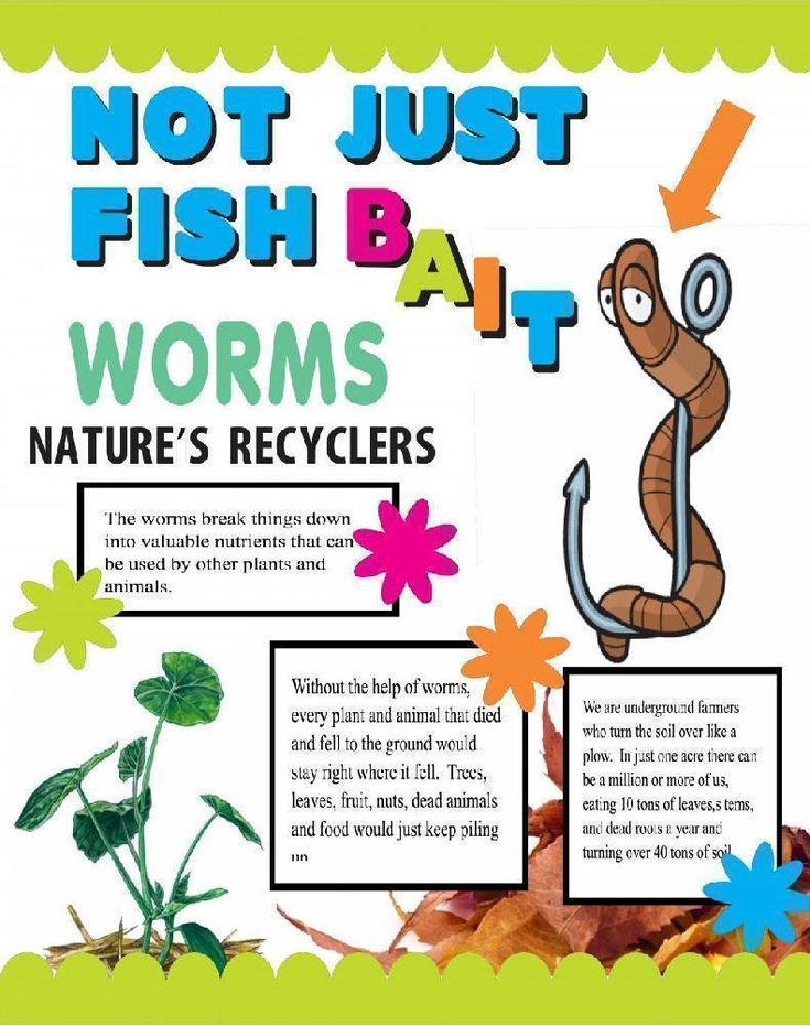 Make a Science Fair Project | Poster ideas - The Worm | Animal Science Project for Kids