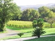 Domaine Bellegarde - Jurançon wine