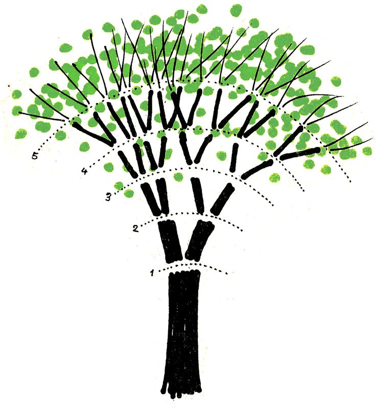 albero leonardo da vinci - Cerca con Google