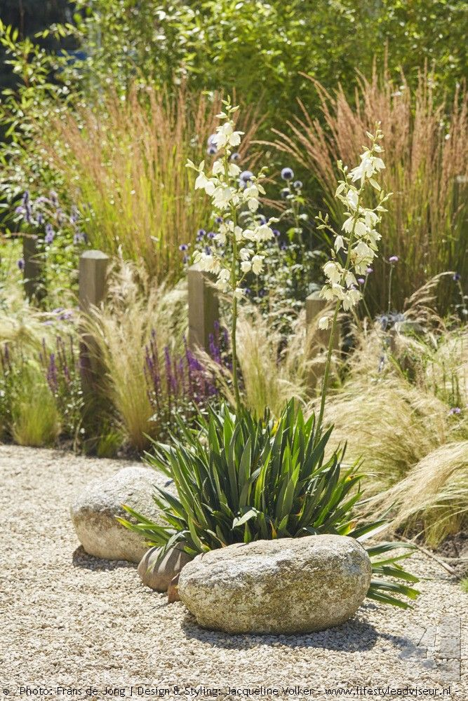 281 best Ornamental Grasses images on Pinterest | Ornamental ... - grass garden design