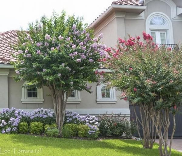 60 Beautiful Small Flowering Trees Front Yards Design ...