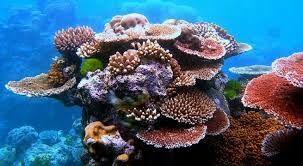 arrecifes - Buscar con Google