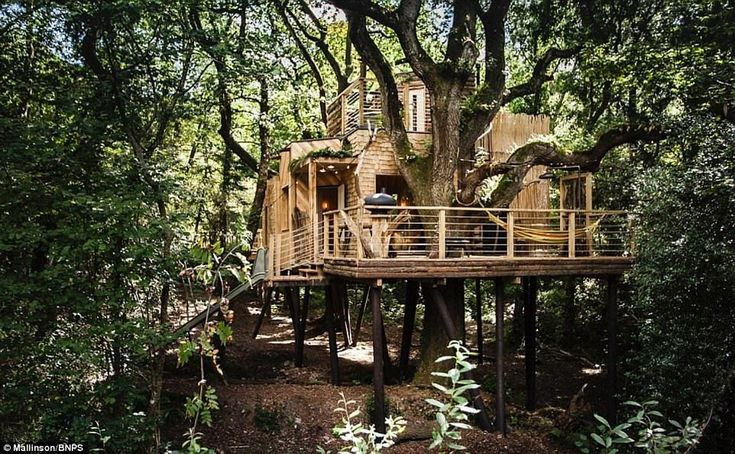 The Woodsman's Treehouse in Dorset is up for the Riba House of the Year award. With entry via a rope bridge and a sauna box on the roof, it's certainly unusual.