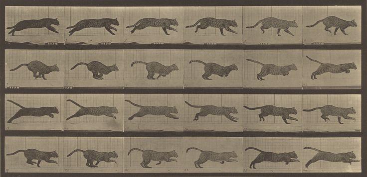 Animal Locomotion; Eadweard J. Muybridge (American, born England, 1830 - 1904); 1887; Collotype; 17.9 x 38.1 cm (7 1/16 x 15 in.); 84.XM.628.57; J. Paul Getty Museum, Los Angeles, California