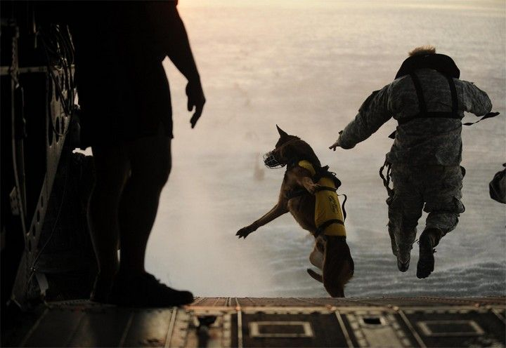 it turns out, that dogs jump with a parachute too! :)