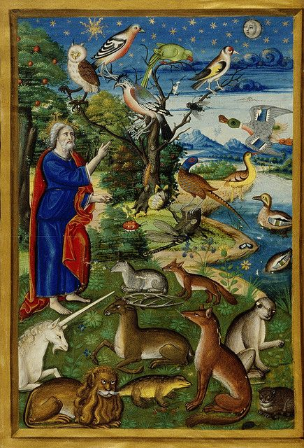 Genesis: The creation of the animals including the unicorn Oxford MS. Douce 135 fol-017v