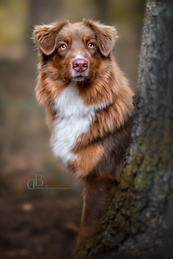 Hundefotografie Dogphotography Hundefotografie Hunde Fotos Hundefotos