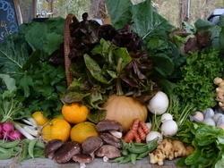 Harvest from Turkey Hill Farm.