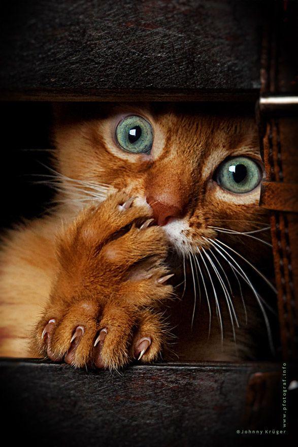 Omg #cat