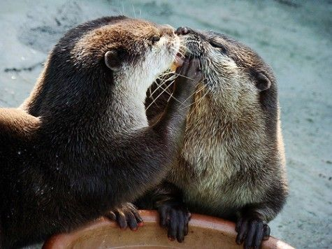Rue The Day! » 14 Adorable Animal Kissing Photos