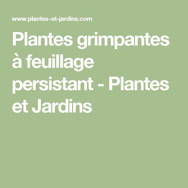 Best 25 plante grimpante feuillage persistant ideas on pinterest clematite persistant for Plantes grimpantes