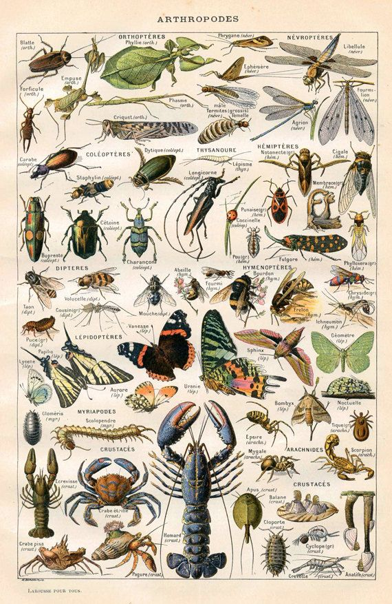 "Vintage Natural History Print ""Arthropodes"" Insect Collection Antique Print - Bugs Butterflies Moths on Etsy, $12.00"