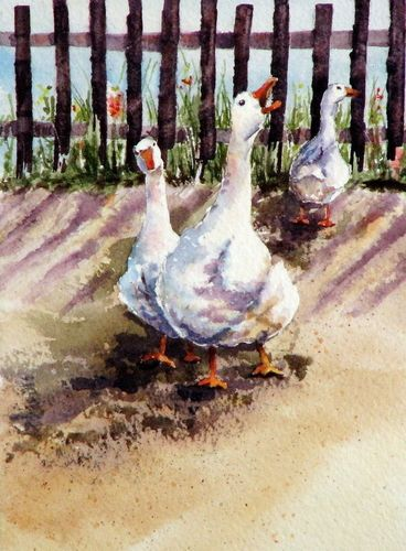 141 best images about Watercolor Ducks on Pinterest