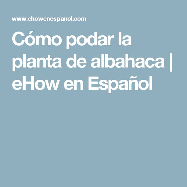 Cómo podar la planta de albahaca | eHow en Español