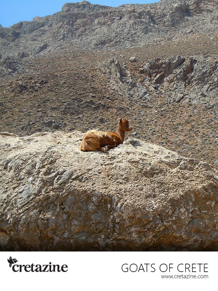 The king of a rocky world!  On the road to a beautiful, secluded beach: Agios Nikitas #Crete http://cretazine.com/en/crete/travel-explore/beaches/item/1135-agios-nikitas-beach