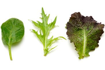 Guide to salad leaves