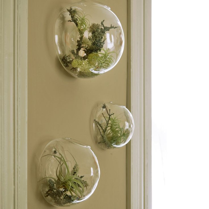 aerium: a terrarium containing air plants; it doesn't need soil. these come with all components needed, and i love that they're wall mounted. any size will do.