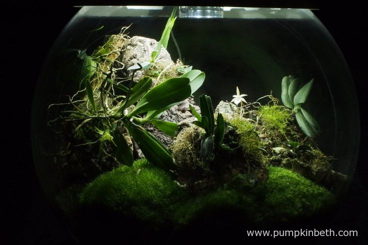 The Madagascar BiOrbAir Terrarium (part five) - Pumpkin Beth