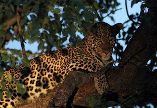 Dream Destinations (Regenwaldreisen): Leopard`s View Game Lodge, Südafrika