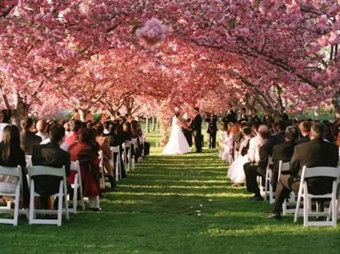 Brooklyn Botanical Garden Get Married Under A Cherry Blossom Tree And Reception At The Palm House