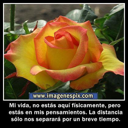 imagenes con mensajes para mi | Frases al Amor » Blog Archive » Imágenes de rosas con frases de ...