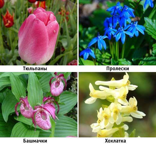 подборка тенелюбивых цветов