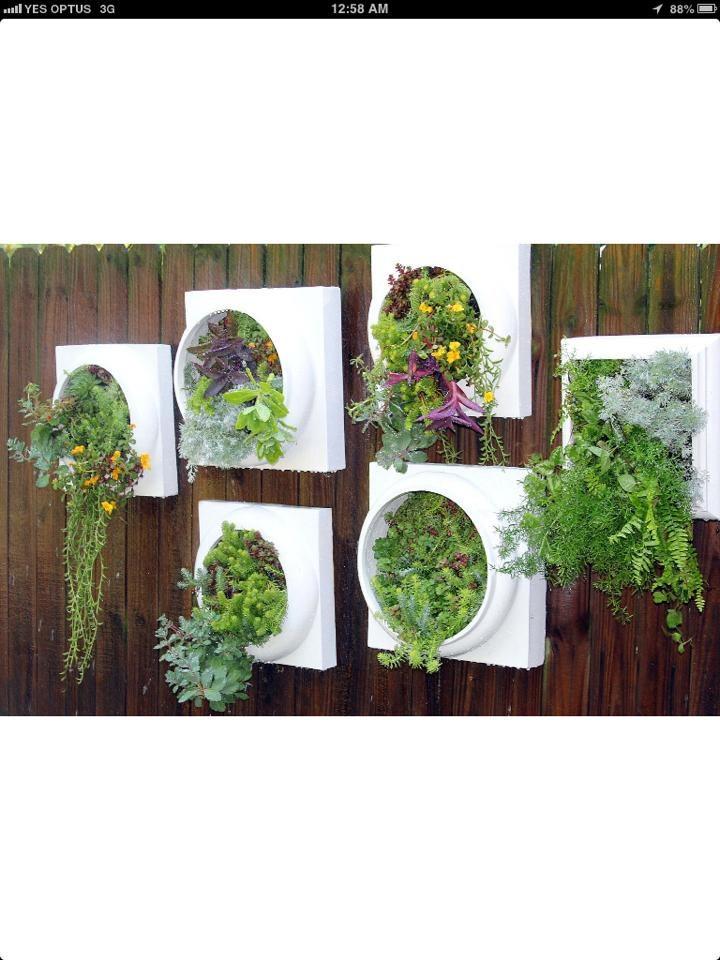 Kitchen wall herb garden, Perfect fresh herbs in an elegant wall display.