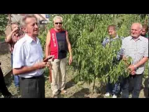 Ivan Hričovský: Letný rez v auguste - čo vtedy režeme? - YouTube