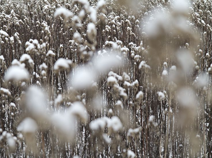 Photo by Tine Bernsen I am Winter Nordic Fine Art