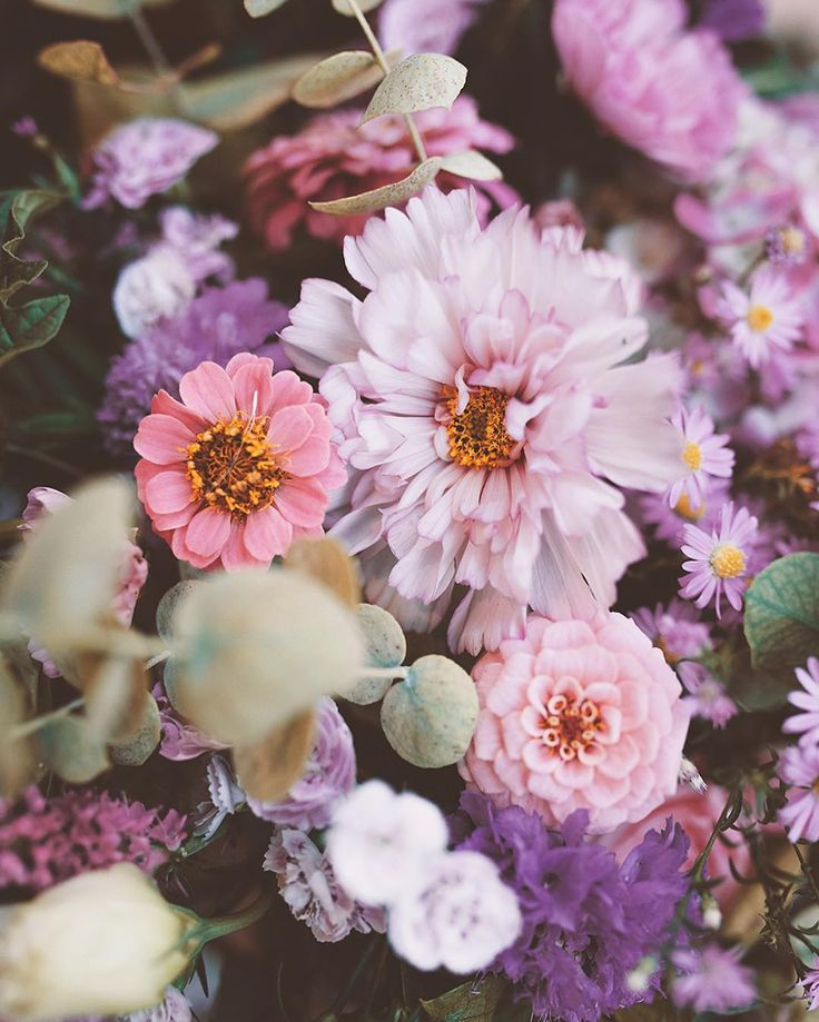 Strange Brew Blooms  • #blooms #magicbouquet #photography #claireisblooming #fleuriste #florist #lifestyle #witch #vegetal #weonlybloomatnight #love #botanic #plants #vsco #vscocam #floralarrangement #dahlias #fern #botanic #bouquet #wild #wildbouquet #doingtheflowers #minuitsauvage #photography #nikon #nikonphotography #lovely #strange #blomsterhandler