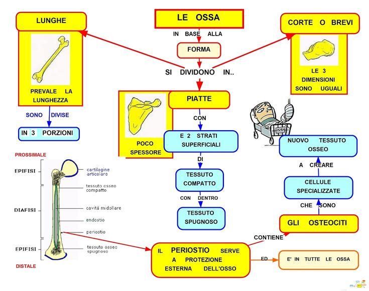 Mappa Concettuale: Tipi di ossa #appunti #schemi #scuola