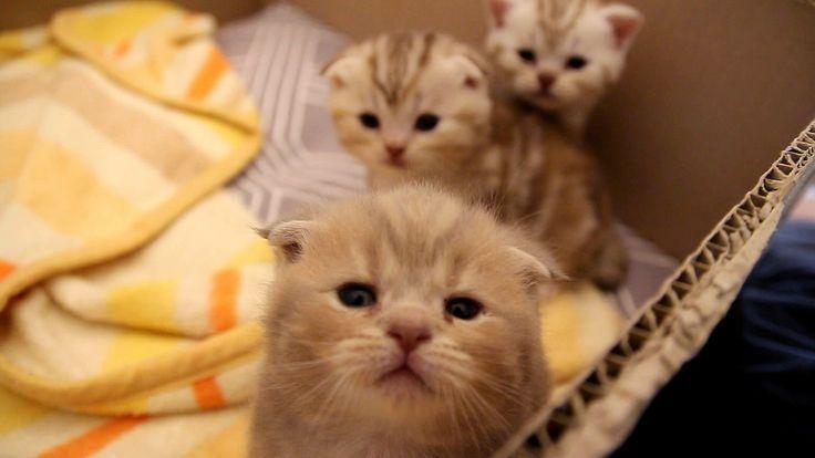 [Cat's daily] 이즈의 뒤집기