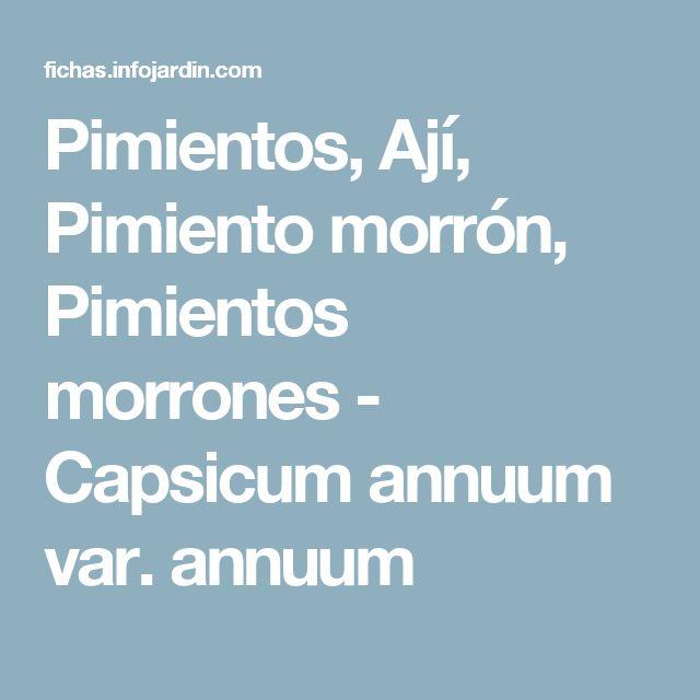 Pimientos, Ají, Pimiento morrón, Pimientos morrones - Capsicum annuum var. annuum