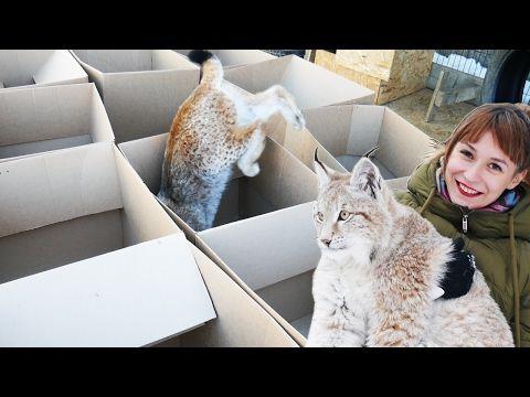 БОЛЬШИЕ КОШКИ ЛЮБЯТ БОЛЬШИЕ КОРОБКИ / BIG cats DIG BIG boxes - YouTube