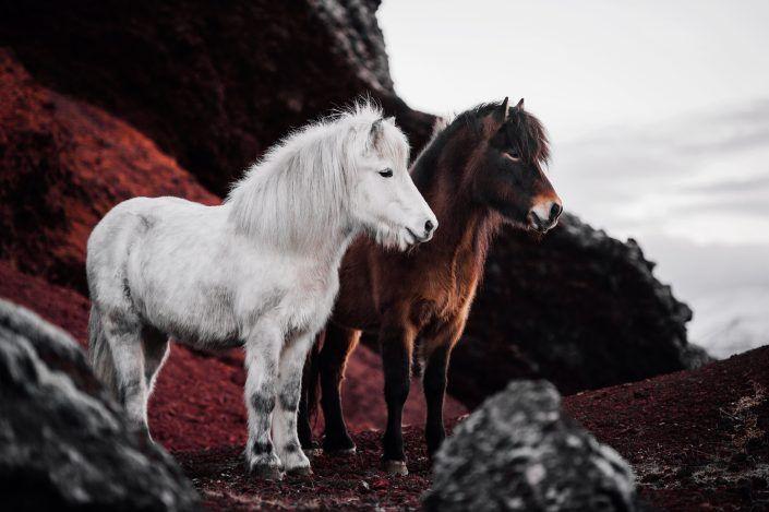 Fotos Pferde In Der Natur I Anna Ibelshauser Pferde Hintergrundbilder Pferde Niedliche Pferde