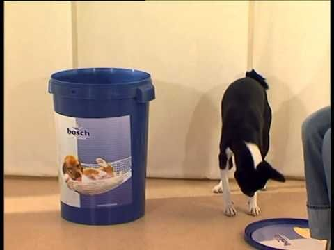 команда Ко мне - дрессировка собак дома с нуля