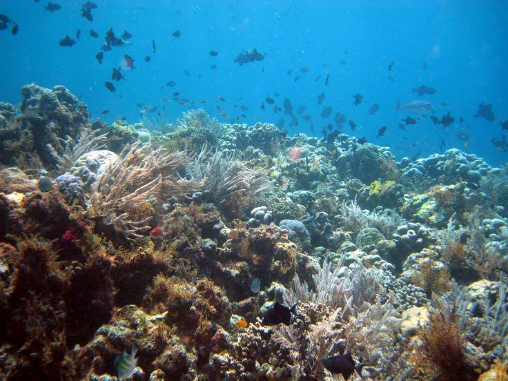Menikmati Surga Bawah Laut di Taman Nasional Wakatobi, Sulawesi ...
