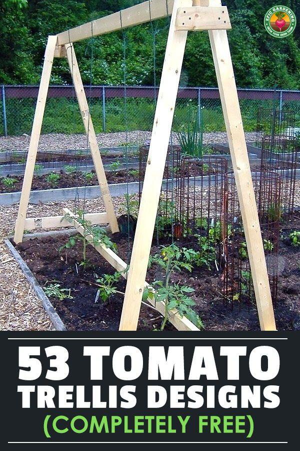 53 Tomato Trellis Designs Completely Free Epic Gardening Vegetable Garden Trellis Tomato Trellis Spring Vegetable Garden