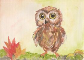 young owl by martystka