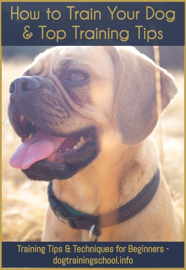 Dog Training Active Collar Instructions Online Dog Training