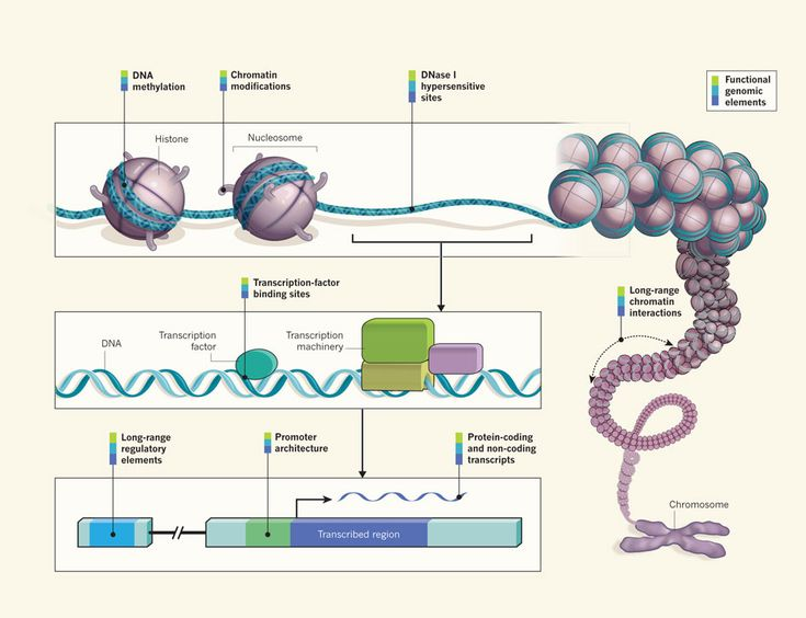 An Integrated Encyclopedia of DNA Elements in the Human Genome