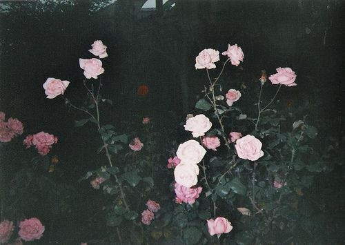 photography tumblr hipster vintage indie night flower flowers pink ...