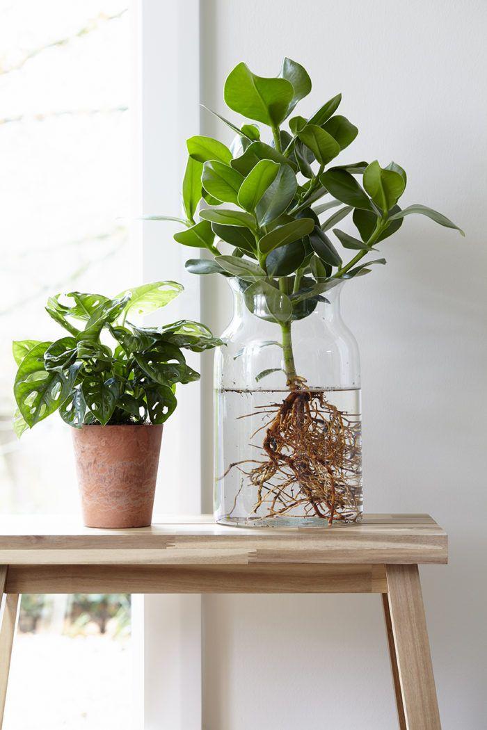Så lyckas du med odlingen inomhus – 7 heta tips | ELLE Decoration