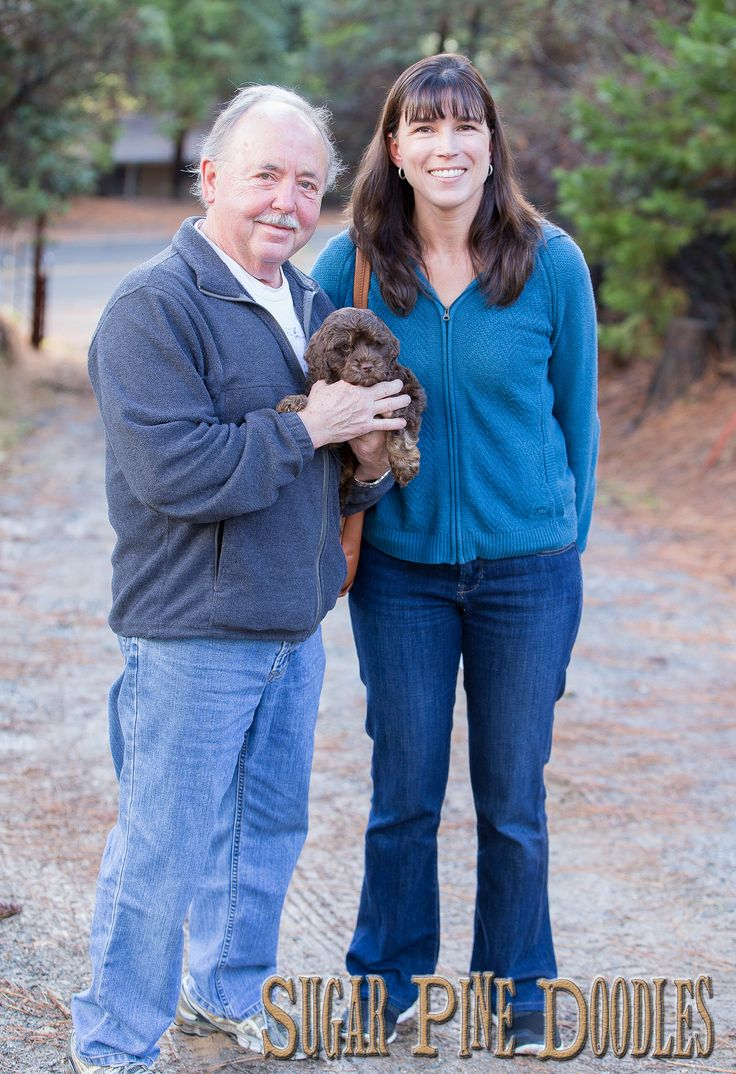 Best australian labradoodle puppies available for adoption